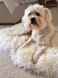 Rug: John Lewis, Dog: Model