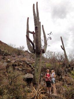 sisters-cactus